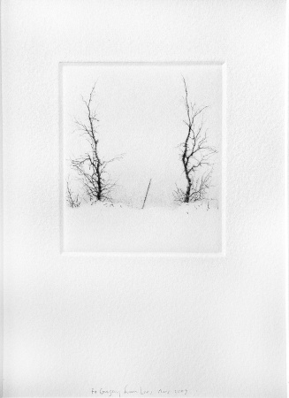 UNTITLED (TWO TREES AND A STICK)
